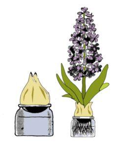 praktijk-hyacintenlaan-intentie